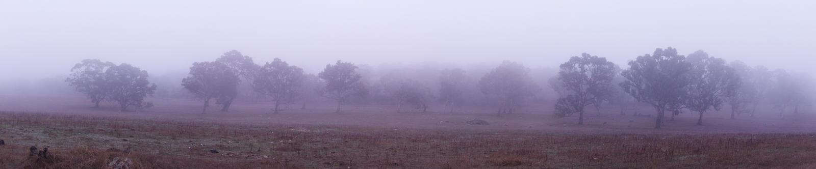 Mt Torrens Fog by darksidelemm
