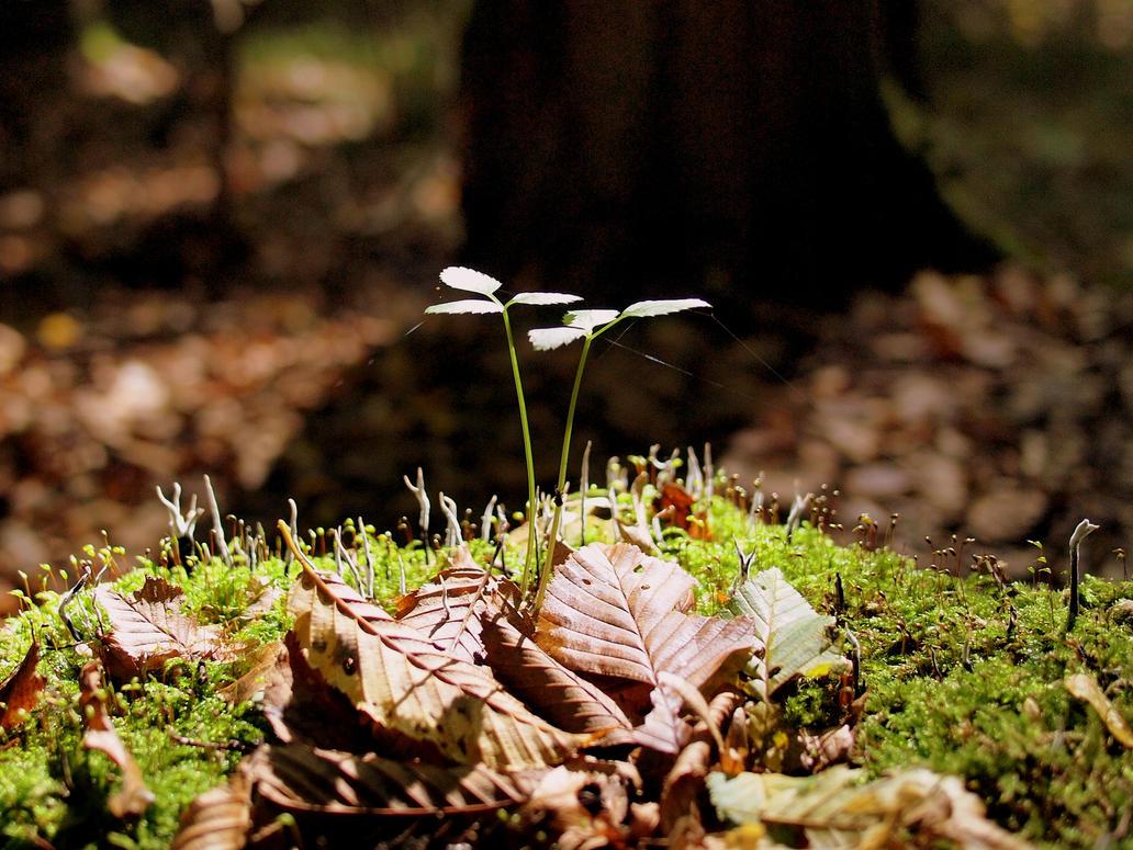 Autumn by Shocktherapist