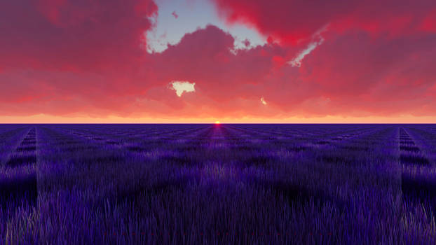 Lavender Field 4K