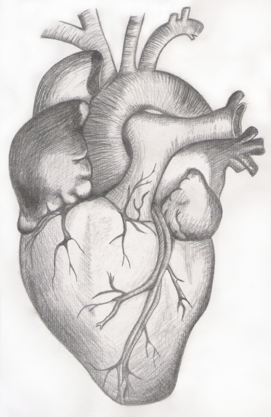 Real Heart Sketch