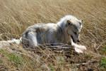 Kiba White Wolf Costume
