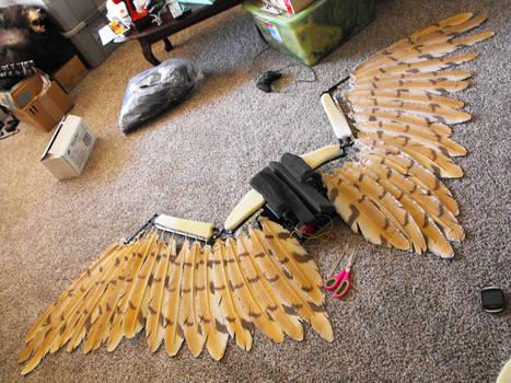 Wing Peek WIP