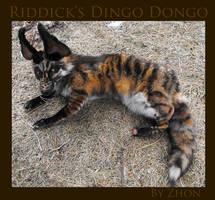 Riddick's Dingo Dongo by Zhon