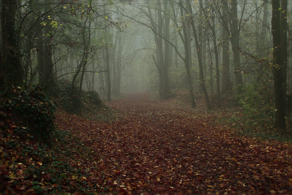 foggy forest by a - photo #3