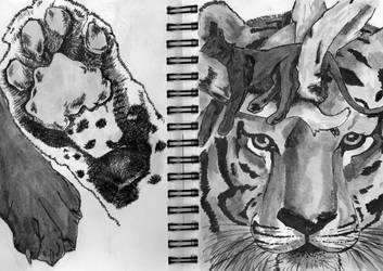 paw, panther and tiger by BAKKSAIGA
