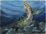 turtle by BAKKSAIGA