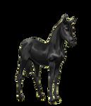Howrse Fresian Foal TRANSPARENT BG