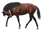 Precut Horse with Mane and Tail STOCK