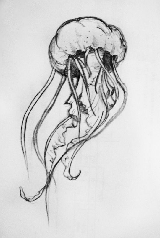 How to draw a realistic jellyfish - photo#13