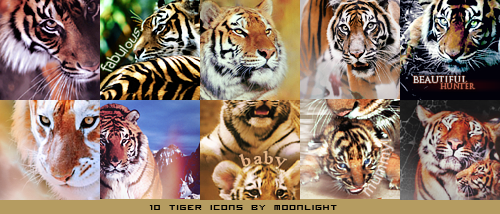 A Never Ending Dream ~ Moonlight Gallery 10_tiger_icons_by_cinderellaswan-d4b5xe0