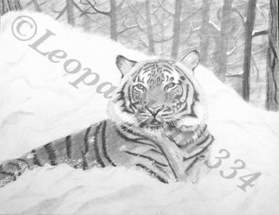 Snow Tiger by leopardpath334
