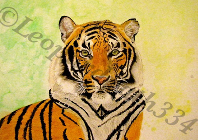 Watercolor Tiger by leopardpath334