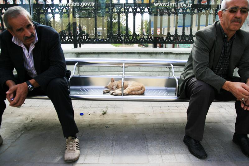 otobus duraginda kedi by bunyaminsalman