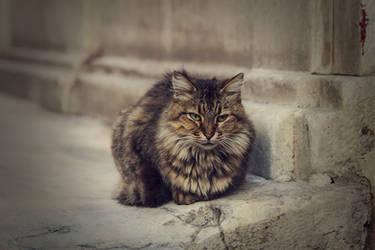 Galata Mevlevihanesi'nde bir kedi by bunyaminsalman