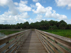 Pathway over Green Cay- Summer