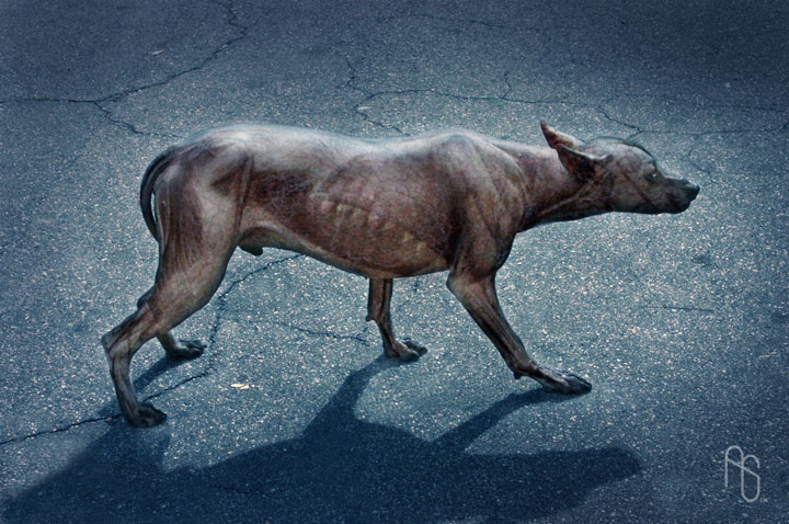 I Am Legend Infected Infected Dog 02 by aar...