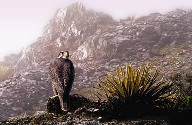 Prairie Falcon In The Mist