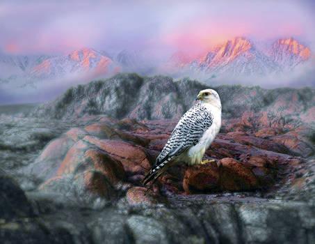 Arctic Majesty