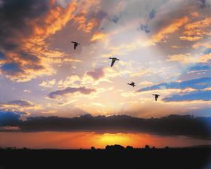 Ducks at Dawn
