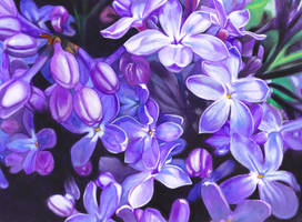 Lilac painting for Mother's Day