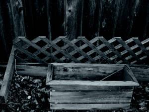 My spooky back yard