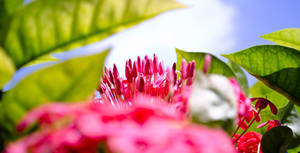 flowery by airsteve
