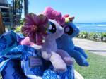 Pinkie and Rainbow in hawaii