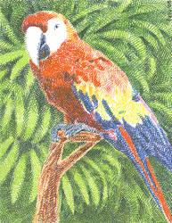 Gel Pen Parrot