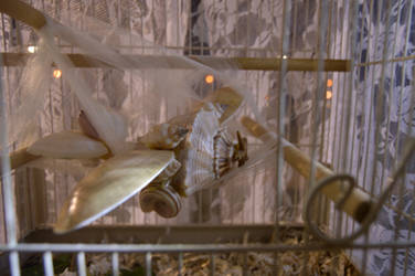 Seashells and Birdcages