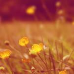 Dreams of Spring by incolor16