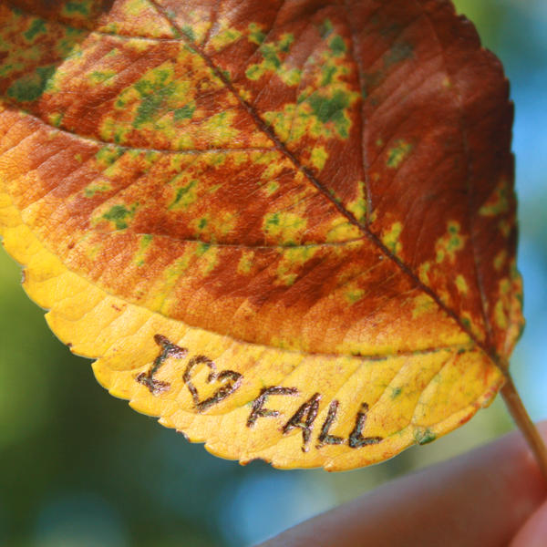 I Love Fall by incolor16