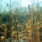Under Nature's Spell