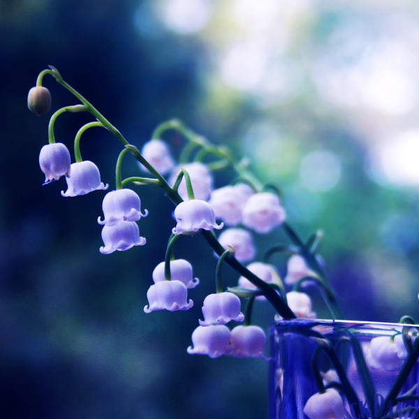 Lily Of The Valley By Incolor16 On DeviantArt