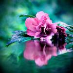 September Rain by incolor16