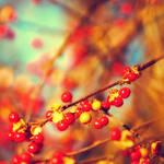 Autumn Heartbeats