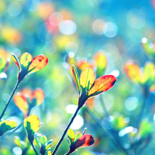 colors of spring by incolor16 on deviantart