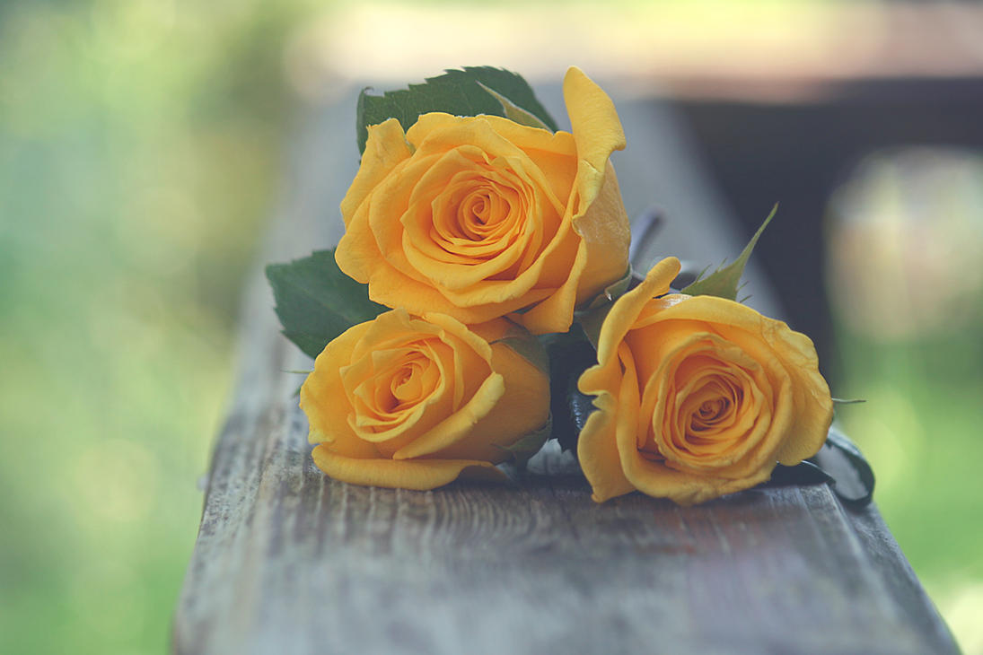 Yellow Roses By Incolor16 On Deviantart