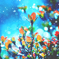 Colorful Winter by incolor16