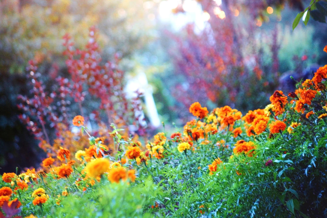 Dreams of Marigold by incolor16