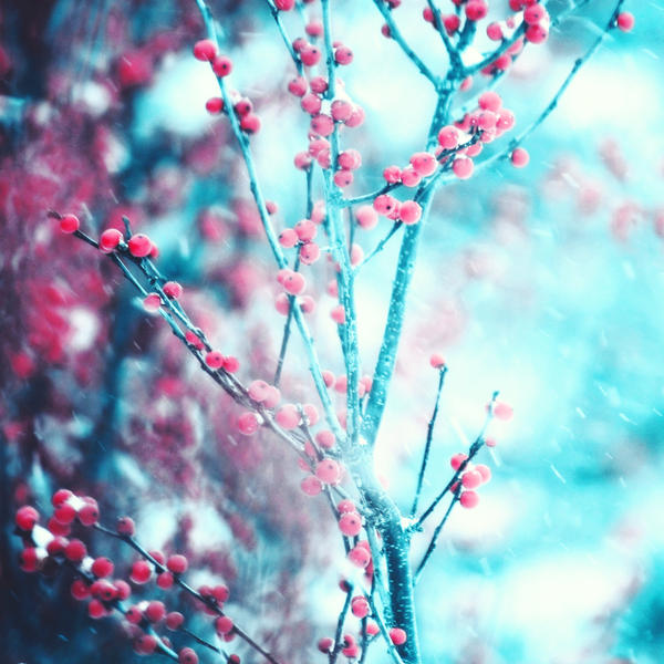 Winter Berries by incolor16