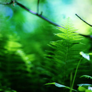 lush overgrowth