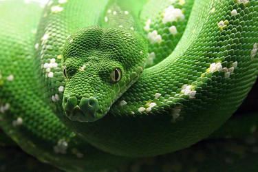 snake by photonensauger