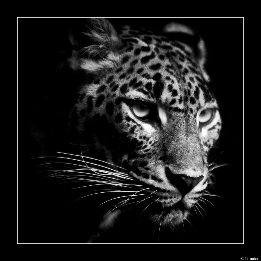 Leopardo by ufinderip