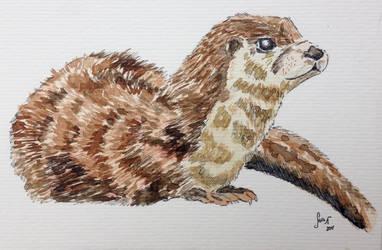 16. Eurasian otter by dolphincat95