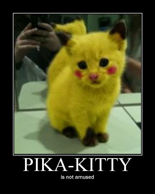 What Did Grumpy Cat Look Like As A Kitten