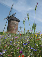 Windmill And Flowers I by waterdrup