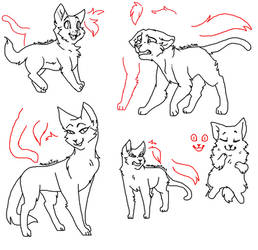 Free Cat Bases by Mmechitass