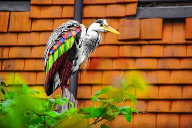 Rare Heron