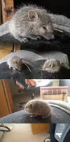 Friendly baby mice