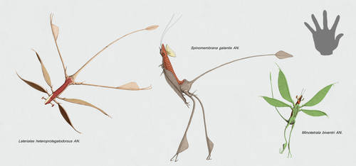 Ciliomembrana (caeles) by Sanrou